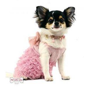 chien_robe